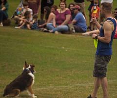 OK! (cizauskas) Tags: dog discdog sports competition piedmontpark atlanta georgia dogwoodfestival