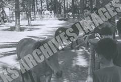 EXP69-138-3-3-6869 (Kamehameha Schools Archives) Tags: kamehameha archvies ks ksg ksb oahu kapalama luryier pop diamond 1969 1968