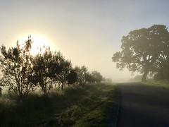103/365: Sun and Fog
