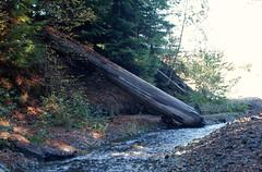 2009.10.24-021 (MrBigDog2k) Tags: trees avenueofthegiants redwoods creeks