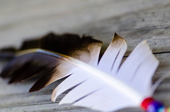 Feather Fun (Azca.B) Tags: feather closeup macro macrounlimited