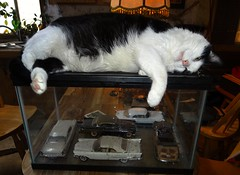 """""""Ozzy"""" (EcoSnake) Tags: ozzy cats pets friends resting favoriteplaces"""