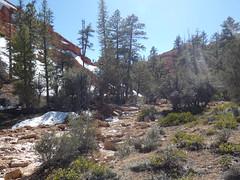 P1000331 (odetojoy24) Tags: bryce canyon streams utah national parks
