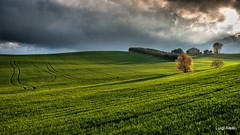 Marche countryside (luigi.alesi) Tags: macerata marche italia italy mogliano petriolo paesaggio landscape scenery tramonto sunset luce light ombre shadows campagna coltivazioni verde green rural rurale natura nature cielo sky nuvole clouds nikon d750 raw