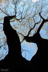 コノシタニ (atacamaki) Tags: xt2 xf 1855mm f284 fujifilm jpeg撮って出し atacamaki japan ibaraki kasumigaura かすみがうら 出島の家 tree nature spring day life sky 庭 shadow