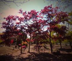 Nuevos ropajes (Felipe Sérvulo) Tags: árbol árboles nature naturaleza campo desolación colores color bonito miedo colors natura