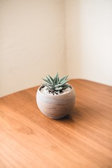 potted green plant inside room - Credit to https://myfriendscoffee.com/ (John Beans) Tags: coffee cafe coffeebeans shopbeans espresso coffeecup cup drink cappucino latte
