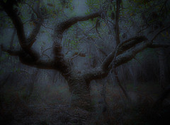Forest Nocturne (Kevin Rheese) Tags: night banksia nocturnal forest twilight mystical nightmare magic foreboding trees bush victoria australia