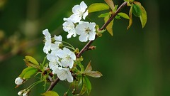 Hulst (Omroep Zeeland) Tags: bloemen