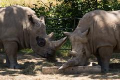 SafariWest-_DSC1538 (Vamsi K) Tags: california nature safari wildlife google santarosa ca usa
