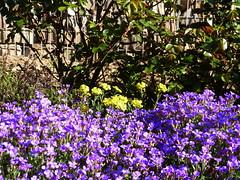 2019 Germany // Unser Garten - Our garden // im April // (maerzbecher-Deutschland zu Fuss) Tags: garten natur deutschland germany maerzbecher garden april unsergarten 2019