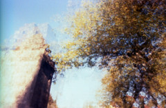 (matériel brouilleur) Tags: diana pinhole stenope estenopeica 35mm expiredfilm tungsten lomography lomo