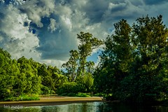 CLOUDS ABOVE THE LAKE (len.austin) Tags: afternoon algae australia bird brisbane clouds grass lake landscape outdoor