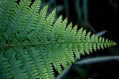 → (Bloui) Tags: 2019 botanicalgarden eos7d jardinbotanique march serres montréal québec leaf fern vegetal green