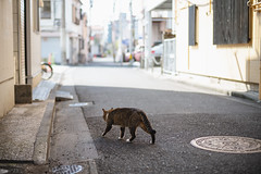 猫 (fumi*23) Tags: ilce7rm3 sony street a7r3 animal alley katze gato neko cat chat cosina nokton manualfocus bokeh voigtlander 58mm voigtländernokton58mmf14slⅱ ねこ 猫 ソニー コシナ ノクトン フォクトレンダー