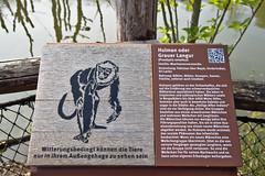09042019 Zoom Zoo Gelsenkirchen 4 (peschuschach) Tags: zoo zoom gelsenkirchen