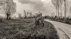Errance (Jean-Marie Lison) Tags: leeuwsaintpierre pajottenland clôture chemin noiretblanc nb monochrome eos80d sigmaart