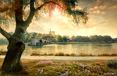 Sur le pont d'Avignon (Jean-Michel Priaux) Tags: paysage landscape tree sun sunset avignon vaucluse france river rhône church city priaux nature hdr shadow shadows isle goldenhour gold