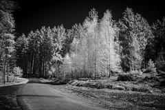 The_Dark_Side_Of_Infrared.jpg (NoBudgetPhoto.de) Tags: bw baum dark ir infrared schwarzweiss starse street tree wald