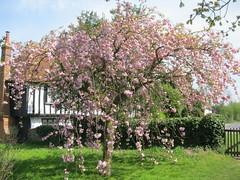 Stebbing, Essex (golygfa) Tags: essex historicchurch simonjenkinsbestchurches spring