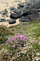 Normandie 2016 / Normandy 2016 (Joseff_K) Tags: falaise cliff flower fleur rocher rock plage beach normandie normandy cotentin nikon nikond80 d80 tamron tamron1750f28 plongée highangleshot