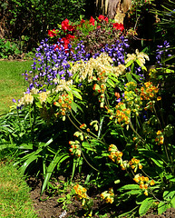 Spring (nedjetwave) Tags: flowers springtime garden flora flower sunshine cowslips pieris bluebells hebe heartbreaker colour nature nikon nikkor1870