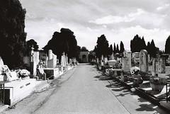 Cemetery (goodfella2459) Tags: nikonf4 afnikkor24mmf28dlens cinestillbwxx 35mm blackandwhite film analog rimini cemetery italy graves tombs trees path bwfp