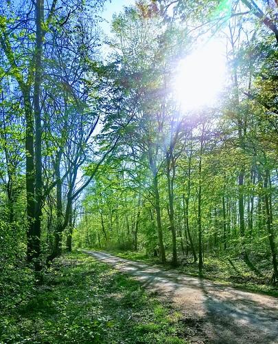 Wald ©  dmytrok
