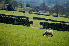 Gateways with Sheep (Hector Patrick) Tags: northyorkshire rosedale fujifilmxh1 fujinonxf18135lmoiswr sheep walls gates farming flickrelite britnatparks flickr fuji countryside capture 1 pro capture1pro