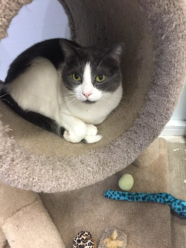 Mitch - 5 year old neutered male