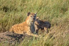 BK0_1602 (b kwankin) Tags: africa hyenaspotted serengeti tanzania baby