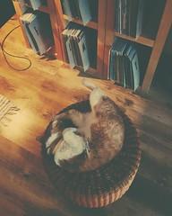 . . .  #maui #cats #cat #catworld #love #iloveyou #photography #photodirector  #catphotography #catlovers #catoftheday #catoftheweek #catparadise #catstagram #memories #loveliest #catcommunity #beautiful #homesweethome #closetoyou #猫 #インスタント #猫の写真 #今日の猫 # (Peeano Photography - ピアーノ写真) Tags: love 猫の世界 closetoyou catphotography 今日の猫 インスタント samsunggalaxys9 catoftheweek beautiful 猫の写真 私は猫が大好きです cat homesweethome catparadise memories theloveliest maui catstagram loveliest 猫 iloveyou cats catlovers kittensofworld catcommunity catworld catoftheday photodirector photography