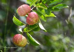 BK0_5733 (b kwankin) Tags: africa flora ruahanationalpark tanzania