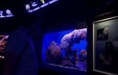 (Cindy en Israel) Tags: observador corales animales fauna persona hombre vidrio pecera acuario eilat israel turismo travel tour viaje paseo az violeta lila colores penumbra turista