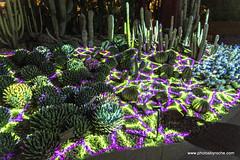 Electric Desert (doveoggi) Tags: 7353 arizona desert phoenix desertbotanicalgarden electricdesert klipcollective
