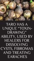 """Taro Has A Unique """"Toxin-Drawing"""" Ability, Used By Healers For Dissolving Cysts, Fibromas And Treating Earaches (healthylife2) Tags: tarohasaunique""""toxindrawing""""ability usedbyhealersfordissolvingcysts fibromasandtreatingearaches"""