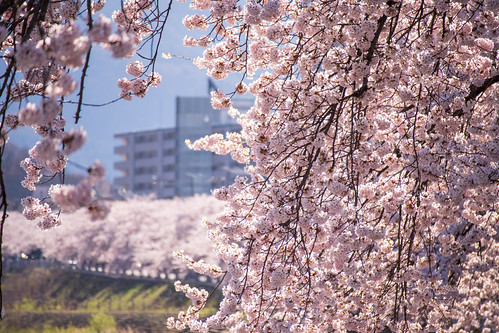 Mamigasaki river 20190420-7