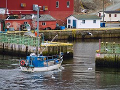Return to Port (Tk_White) Tags: petty harbour newfoundland ocean dock boat panasonic lumix g9