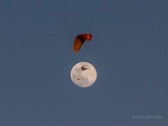 paraglider moon Airplane-9037 (LeeAnn2251) Tags: airplane jet plane paraglider para sail soar moon night hang glider blue