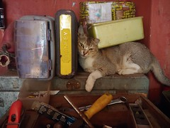 Cats & Tools (Yogesh@haritastudios) Tags: cats tools diy fix photography funny