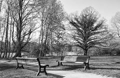 Please sit down... (Zoom58.9) Tags: trees bank mood landscape nature outside path bw monochrome bäume stimmung landschaft natur draussen weg sw europe germany europa deutschland niedersachsen hagen sony