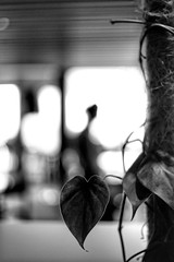 Heart (1) (Polis Poliviou) Tags: touristresort skybluewaters sandybeaches cypriottourism mediterraneansea winterlove relax polispoliviou polis poliviou πολυσ πολυβιου cyprus cyprustheallyearroundisland cyprusinyourheart yearroundisland zypern republicofcyprus κύπροσ кипър chipre кипар ©polispoliviou lovecyprus europe nature coastal ©polispoliviou2019 naturepics limassol lemesos λεμεσόσ port water coast ship boat light sea seaside seafront seascape beach storm natural winter raining mediterranean sandy sand environment earth beautiful soul meditation naturephotography lovenature beautyinnature hotel rain rainy
