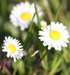 Happy Easter. (giuselogra) Tags: flowers flora fiori fiore nature naturepics torino turin italy italia piedmont piemonte