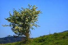 Zeru urdinak (eitb.eus) Tags: eitbcom 21786 g149074 tiemponaturaleza tiempon2019 primavera bizkaia durango victoruriarte