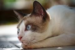 Katze / Cat [430] (Jörg Arlandt) Tags: haustier kroatien tiere tierfoto tierportrait