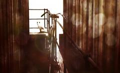 lOvECAt (☺ ChimKami ☺ Rushing In Slow Motion !) Tags: dark chimkami chim metaverse 3d sl secondlife photography art photoshop artwork digitalart light virtual mesh shadow dream scene imagination creativity design awesome stylish magical magic fantasie tale fantasy wind sea water sim landscape exploring outside nature umi tokyostreet skip asian port float paradoxivory dox photogenic cat siamese bicycle lovecat monochrome blackandwhite sepia