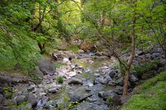 DSF_6847-1 (Gedawei 葛大为) Tags: nikon alumrock creeks california northerncalifornia sf bay area sanjose unitedstatesofamerica