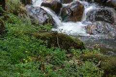 DSF_6823-1 (Gedawei 葛大为) Tags: nikon alumrock creeks california northerncalifornia sf bay area sanjose unitedstatesofamerica
