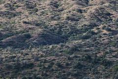 042020193491 (Lake Worth) Tags: landscape landscapes nature