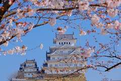 04/40 - Day5 (Rice Tsai) Tags: 日本 關西 賞櫻 櫻花季 兵庫 大阪 japan nippon fujifilm xt3 xseries 姬路城 姫路城